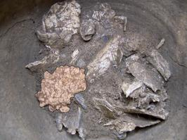 Fragment de crâne issu du décapage en place dans l'urne 237